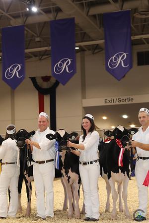 Royal16_Holstein_1M9A9662