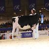 Royal16_Holstein_1M9A9674