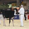 Royal16_Holstein_L32A3709
