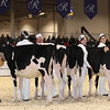 Royal16_Holstein_1M9A9651