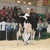 Royal16_Holstein_L32A3610