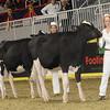 Royal16_Holstein_1M9A9872