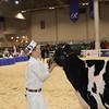 Royal16_Holstein_1M9A9590