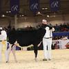 Royal16_Holstein_1M9A9681