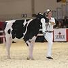 Royal16_Holstein_L32A3793