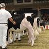 Royal16_Holstein_1M9A9822
