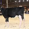 Royal16_Holstein_1M9A9578