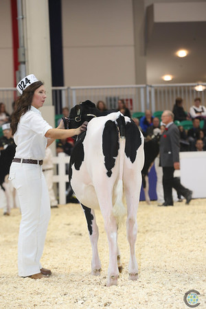Royal16_Holstein_L32A3612