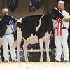 Royal16_Holstein_L32A3797