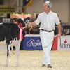 Royal16_Holstein_L32A3590
