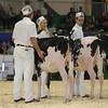 Royal16_Holstein_L32A3573