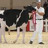 Royal16_Holstein_L32A3787