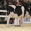 Royal16_Holstein_L32A3724