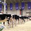 Royal16_Holstein_1M9A9596