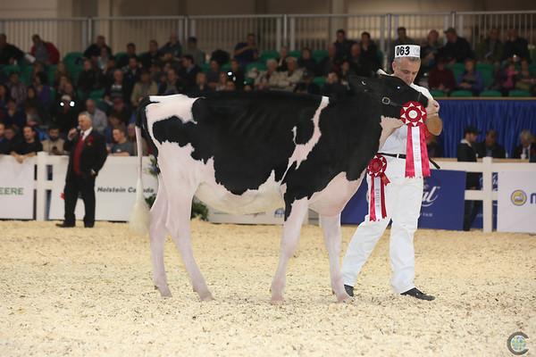 Royal16_Holstein_L32A3791