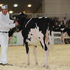 Royal16_Holstein_L32A3619