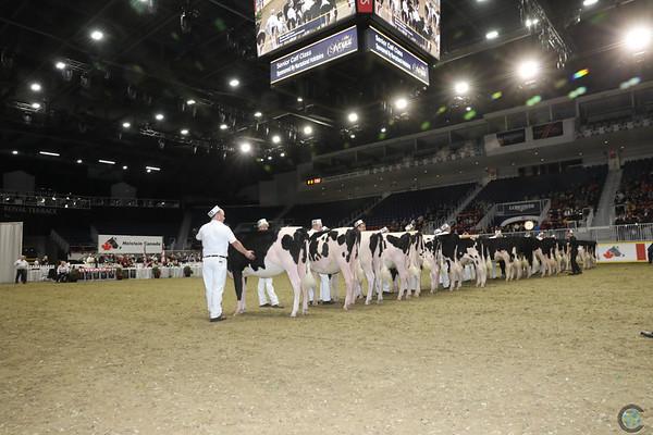 Royal16_Holstein_1M9A9834