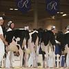 Royal16_Holstein_L32A3694