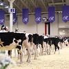 Royal16_Holstein_1M9A9597
