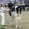 Royal16_Holstein_L32A3809