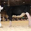 Royal16_Holstein_1M9A9580