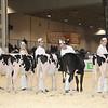 Royal16_Holstein_1M9A9529