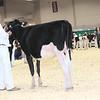 Royal16_Holstein_L32A3632