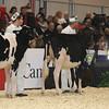 Royal16_Holstein_L32A3723
