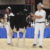 Royal16_Holstein_L32A3685