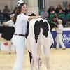 Royal16_Holstein_L32A3614