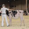 Royal16_Holstein_1M9A9503