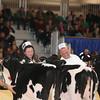Royal16_Holstein_L32A3689