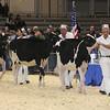 Royal16_Holstein_L32A3773