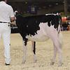 Royal16_Holstein_1M9A9495
