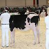 Royal16_Holstein_L32A3642