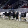 Royal16_Holstein_L32A3806