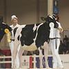Royal16_Holstein_L32A3800