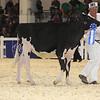 Royal16_Holstein_L32A3792