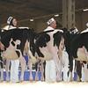 Royal16_Holstein_L32A3668