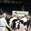 Royal16_Holstein_L32A3837