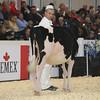 Royal16_Holstein_L32A3607