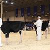 Royal16_Holstein_1M9A9585