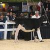 Royal16_Holstein_L32A3743