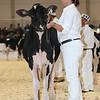 Royal16_Holstein_L32A3646