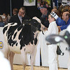 Royal16_Holstein_L32A3643
