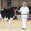 Royal16_Holstein_L32A3710