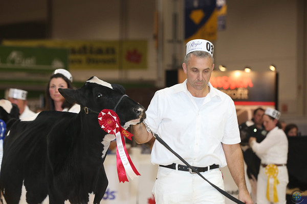 Royal16_Holstein_L32A3703