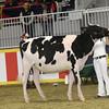 Royal16_Holstein_1M9A9863