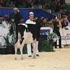 Royal16_Holstein_L32A3656