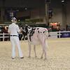 Royal16_Holstein_1M9A9512